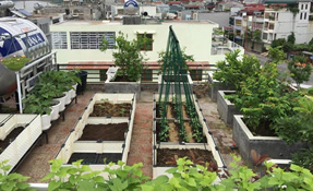 Bỏ túi tip sở hữu vườn rau đặt sàn bằng chậu nhựa hoặc thùng xốp sân thượng nhà phố