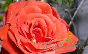 Blog vườn nhà