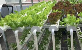 Top 3 mô hình vườn rau thủy canh nhà phố mà bạn nên biết
