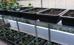 Mô hình trồng rau sạch trên sân thượng nhỏ phù hợp nhà phố bền lâu
